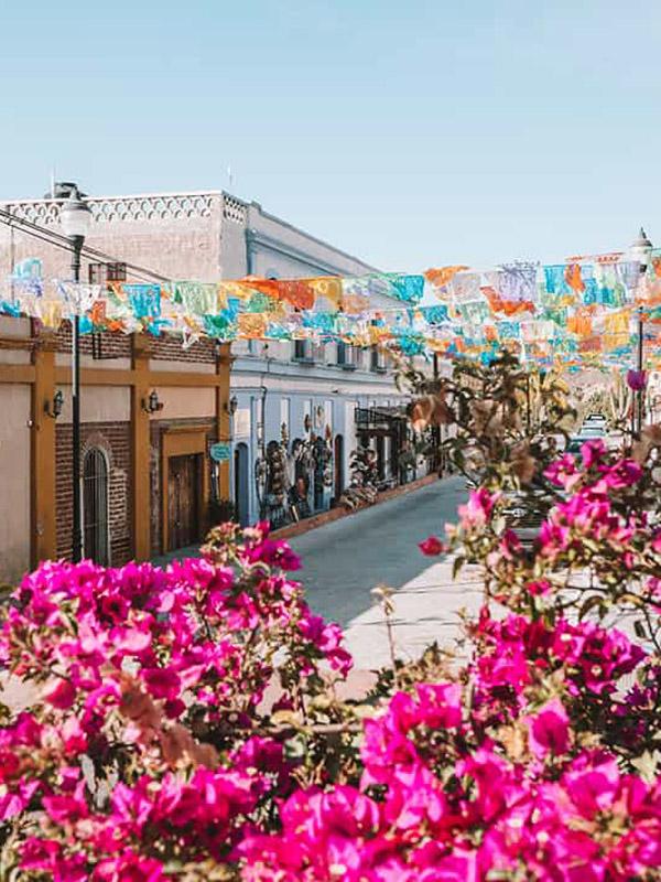 FALCON BIKE TOURS TODOS SANTOS DAWNTOWN